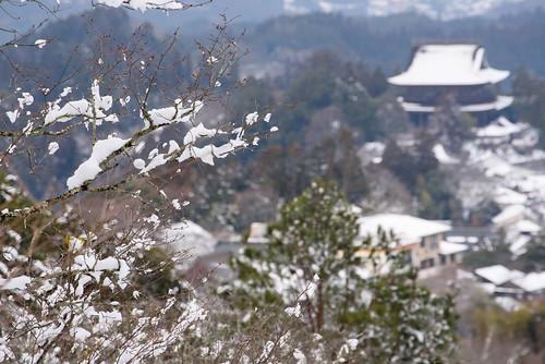 吉野9・Yoshino