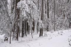 More snow (qorp38) Tags: marh snow