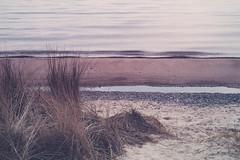 Mossbylund - Grass by the sea - WEB (manuel ek) Tags: mossbylund nikon manuelekphoto 85mm beach seaside skåne sverige östersjön balticsea