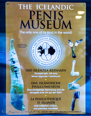 There's only one! (SchwanSongs) Tags: iceland reykjavik penis phallus museum schwansongs