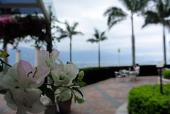 2013-06-09 15.56.08 (pang yu liu) Tags: ocean park travel plant bokeh 06 hualien jun       2013 farglory
