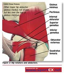 Hip rotators and abductors (sportEX journals) Tags: medicine hip knee ankle rehabilitation sportsmedicine sportex patellofemoral sportstherapy pfps sportexmedicine