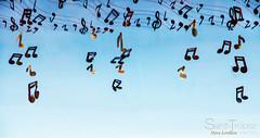 PLUIE DE NOTE (steve lorillere) Tags: music note musik score msica partition musique nota    contagem partitur