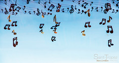 PLUIE DE NOTE (steve lorillere) Tags: music note musik score música partition musique nota 笔记 音乐 музыка contagem partitur оценка примечание الموسيقى،علما،والنتيجة 分数