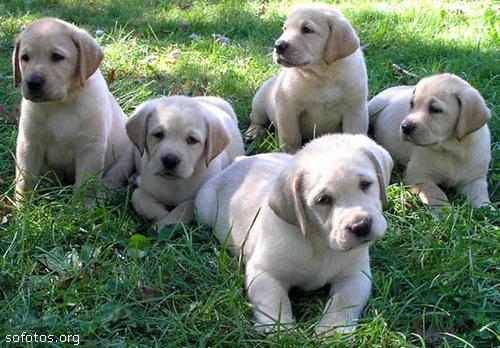 Filhotes de cachorros 33