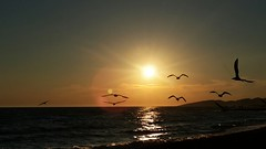 Ulqini - Ulcinj (vegamaster) Tags: flickrandroidapp:filter=none montenegro ulqin ulqini ulcinj olcinum shqipe shqiperia seagull seagulls