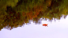 short lull (All Shine) Tags: autumn light abstract reflection art nature water leaves landscape photography poetry outdoor ngc melancholy
