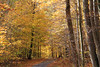 Mellow yellow (SamSpade...) Tags: road trees fall leaves yellow colours mellow 546