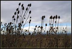 last days of autumn (mhobl) Tags: autumn fall herbst feld burgheim