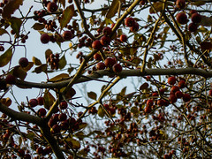 "Berries • <a style=""font-size:0.8em;"" href=""http://www.flickr.com/photos/59137086@N08/11427837446/"" target=""_blank"">View on Flickr</a>"