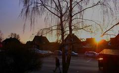 Hindby Encore (brandsvig) Tags: winter sunset tree skne vinter december sundown sweden gr birch bjrk sverige grdigital malm ricoh trd solnedgng grii 2013 hindby