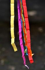 Coloured crepe paper (Veena-Nair) Tags: india home colorsoflife colouredcrepepaper flutteringinwind
