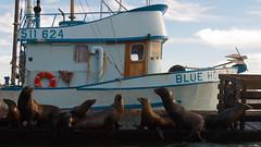 Blue Horizon (ericneitzel) Tags: ocean life california sea usa cute water swim boats mammal boat dock nikon marine eric unitedstates thomas sealife socal seal d200 nikkor epic oceanlife oceanphotography neitzel ericneitzel etneitzel ericneitzel ericthomasneitzel ericthomasneitzelphotography ericthomasneitzel erictneitzel