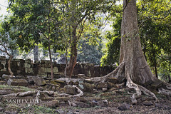 Angkor Thom Tree Roots (Sanjeev Deo) Tags: travel tree nature landscape temple ruins asia cambodia roots siem reap southeast