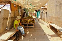 Coconut Seller, Shravanabelagola (Pattugrapher) Tags: street coconut vendor seller jain bahubali jainism shravanabelagola gomateshwara chandragupta