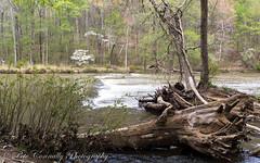 Across The Creek (4 Pete Seek) Tags: statepark water georgia landscape sony alpha tamron sweetwatercreek nex sweetwaterstatepark tamron18200 nex5n sonynex5n tamron18200b011