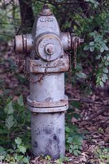 Fire Hydrant or Alien (I)? (gtncats) Tags: park trees water hydrant outside fire firehydrant waterous waterhydrant ef70300mm canon70d photographyforrecreation