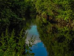 white cart (MC Snapper78) Tags: trees reflections reflecting scotland sony paisley whitecart renfrewshire marilynconnor