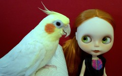 July 6, 2015, Blythe a Day - Wings