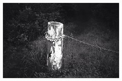 Untitled (keithgerard877) Tags: leica m8 summaron 3535