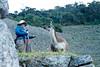 Peru-0712.jpg (Matt and Debbie) Tags: peru llama 2015 wayna winaywayna wiñay