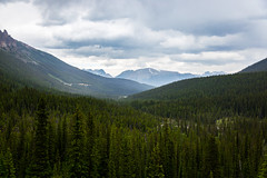 Backside of Moraine Lake (adamfredphotography) Tags: forest green morainelake banff banffnationalpark lakelouise alberta canada nature hiking mountain