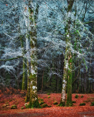 Into the Mystic #9 (Matt Anderson Photography) Tags: 2017 landscape mattandersonphotography scotland uk unitedkingdom hoarfrost magical color nopeople river garry loch oich invergarry december winter lush nature frost frosted fragility ethereal woodland tree outdoors paranormal mystery fantasy tranquilscene fog sunrisedawn coldtemperature scenics traveldestinations autumn idyllic meadow ephemeral emergence majestic ruralscene beautyinnature beechtree moss root perthshire theend madison wisconsin usa