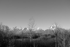 DSCF1923 (AReneephotography) Tags: grandtetons outdoors forest mountains