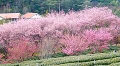 IMG_2962 (JBBTaipei) Tags: taiwan wulingfarm