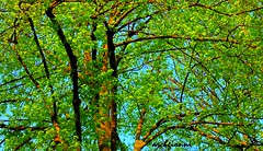 branches and leaves (archgionni) Tags: trees sky verde green nature leaves azul foglie alberi branches natura cielo azzurro rami