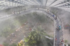 Cloud Forest (jhecking) Tags: misty fog cloudforest gardensbythebay