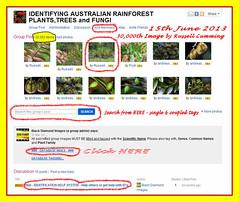 30,000 Images 15th June 2013 - IDENTIFYING AUSTRALIAN RAINFOREST PLANTS,TREES and FUNGI Group (Black Diamond Images) Tags: screenshot rainforest 30000 rainforests australianflora australiannativeplants 2013 australianplants rainforestflora rainforestplants rainforestplant australianrainforest arfp australianrainforests australianrainforestplants identifyingaustralianrainforestplants idrainforestgroupmilestones australianrainforestflora arfmilestone identifyingaustralianrainforestplantstreesandfungigroup idrainforestgroup rainforestidentification 1562013 30000images 30000thimage