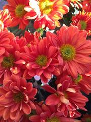 Flowers by Patty Vicknair