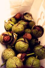 Walnut (jyu-akc) Tags: walnut