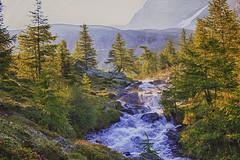 Bach 1 (peter pirker) Tags: tree water canon landscape austria sterreich wasser krnten carinthia landschaft baum hdr dir dynamik peterfoto eos550d peterpirker