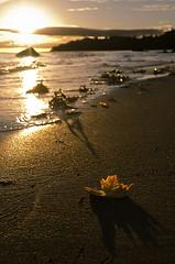 Autumn Sunrise (RobbART878) Tags: ocean morning autumn orange sun art fall leave beach water leaves sunrise photography photo leaf nikon warm natural calming naturallight crisp canadianartist robbart d5100