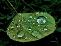 IMG_1750 (RRT:D*:D*) Tags: autumn italy verde green leaves rain yellow foglie drops giallo autunno pioggia gocce rrtdd
