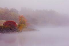 Standing out  Se distinguer du lot (Chizuka2010 (busy)) Tags: trees red mist fall fog river rouge fallcolors ottawa rivire sumac fallfoliage arbres ott