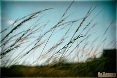 Straws in the Wind (Bozze) Tags: donsö wwwoppnahorisonterse wwwdonsobilderse