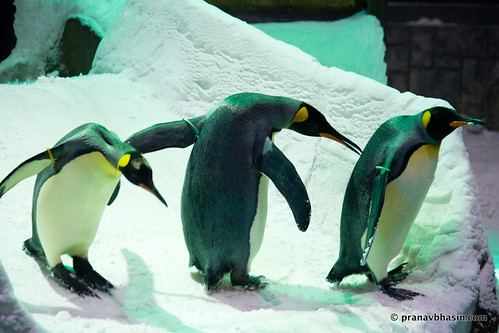 It Takes Three Penguins To Tango, Ski Dubai, Mall Of Emirates, Dubai