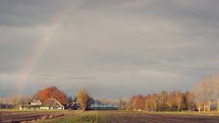 Rainbow over Ruinerwold (andzwe) Tags: november autumn trees light sky copyright sun netherlands dutch field regenboog clouds landscape rainbow farm © herfst nederland wolken scene coloured veld zon drente drenthe landschap boerderij fz50 lichtval bladeren najaar ruinerwold gekleurd panasonicdmcfz50 panasoniclumixdmcfz50 ©andzwe richtingengelgaarde