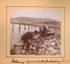 Gathering Oysters at the Hawkesbury River (Australian National Maritime Museum on The Commons) Tags: brooklyn photographic photographs rivers oysters oyster photoalbums hawkesburyriver