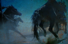 Winner (My Baby Mia) Tags: horses art nature fineartphotos