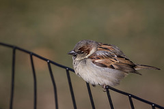Puffy Bird (MaxSkyMax) Tags: park winter usa bird canon is day central usm ef 70200mm f4l mygearandme mygearandmepremium mygearandmebronze mygearandmesilver {vision}:{sunset}=0531 {vision}:{text}=0522