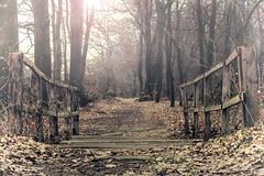Brcke (silkefoto) Tags: brcke landschaft wald februar emsland niedersachsen bienerbusch