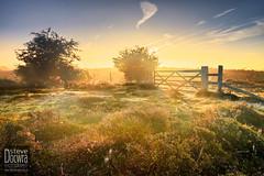 Sunrise on Dunwich Heath (Steven Docwra) Tags: uk morning trees sky colour nature sunrise print landscape photography dawn photo suffolk europe photographer unitedkingdom heather horizon photograph heath british colourful dunwich pathway eastanglia colourimage docwra stevedocwra dowcra