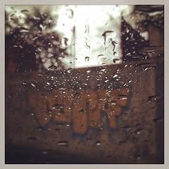 Pioggia di marzo (AnnaPaola54) Tags: square squareformat bologna rise pioggia marzo 2014 iphoneography instagramapp uploaded:by=instagram