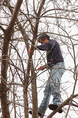 "Steve's Apple Pruning Acrobatics <a style=""margin-left:10px; font-size:0.8em;"" href=""http://www.flickr.com/photos/91915217@N00/13528581794/"" target=""_blank"">@flickr</a>"