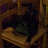Coda cat DERP