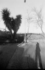 Roma ott 2013 030 (Nonnismi) Tags: shadow bw roma film nikon ombra bn albero palma asfalto 100asa lampione analogic soligor pellicola pietralata scalini fomapan nikonf801